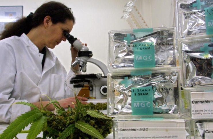 INTA investigarán la adaptabilidad de semillas de cannabis al suelo de San Pedro.