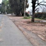 El árbol contra el que chocó el automóvil en el que circulaban los jóvenes.