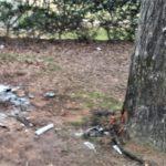 El árbol contra el que chocó el Mini Cooper.