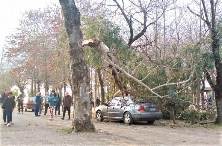 La rama se desprendió y cayó sobre el automóvil.