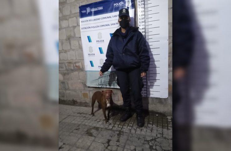 El perro fue recuperado y restituido a su propietaria.