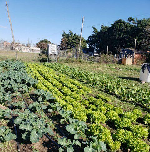 El plan es generar emprendimientos capaces de abastecer el mercado local.